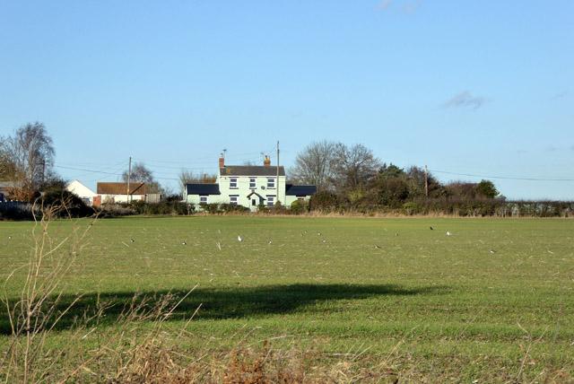 Field between Broman's Lane and East Road, East Mersea