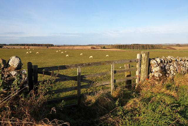 Farmland at Roxburgh Mains