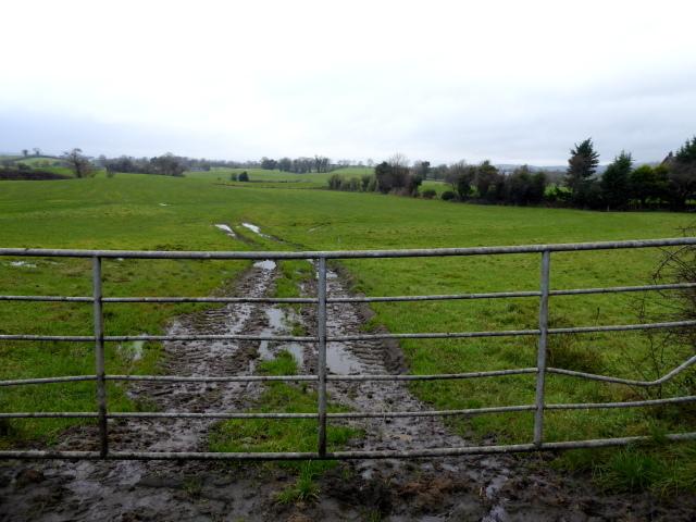 Muddy ground, Tattraconnaghty