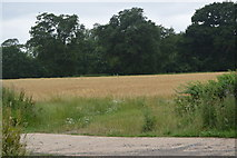 TQ3228 : Arable field by Stonehall Lane by N Chadwick
