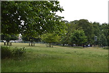 TL4559 : Midsummer Common by N Chadwick