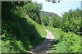 SX4351 : South West Coast Path, Minadew Brakes by N Chadwick