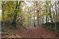 SO8813 : Beech wood east of Prinknash Abbey by M Towers