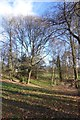TQ2687 : Trees near Kenwood House by DS Pugh