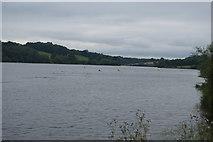 TQ3328 : Ardingly Reservoir by N Chadwick