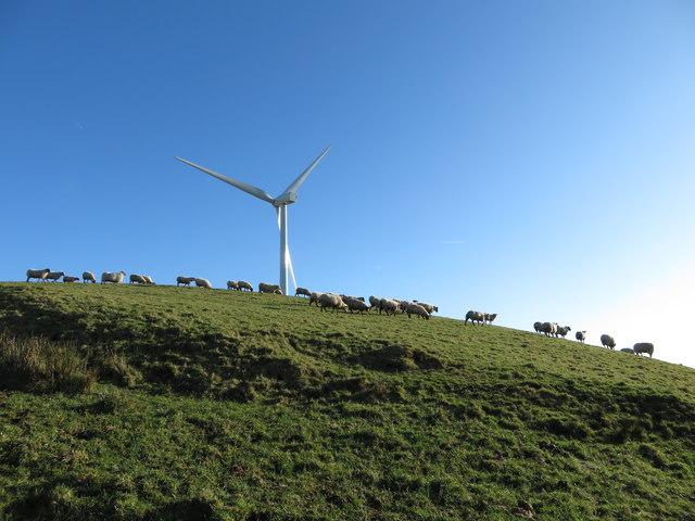 Sheep and wind turbine on Mynydd Portref