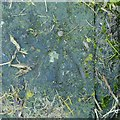 SK4730 : Rivet bench mark, Sawley Flood Lock No.1 by Alan Murray-Rust
