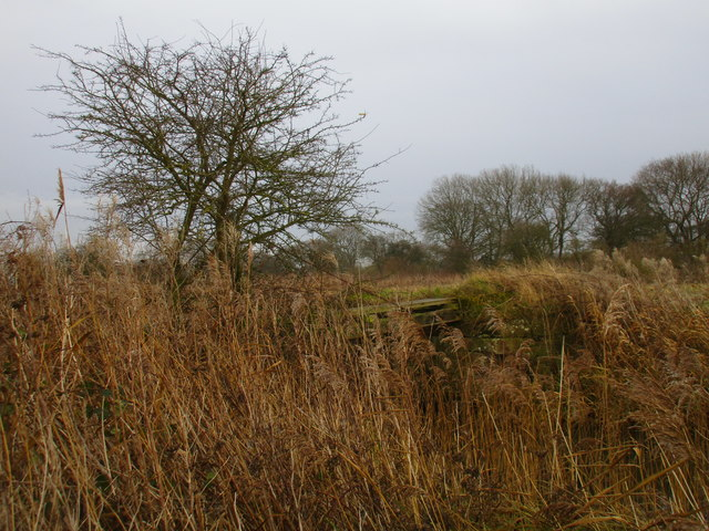 Remains of an old bridge over the Leven Canal