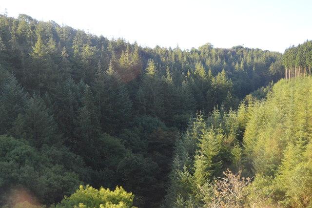 Largin Wood