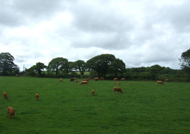 Cattle grazing, Resparveth