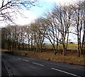 SP2512 : Tree-lined bank above the A361 between Fulbrook and Burford by Jaggery