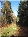 TQ0083 : Track through conifers, Black Park by David Hawgood