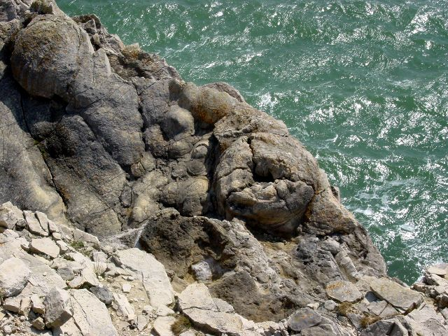 Fossilised tree stumps near Lulworth Cove