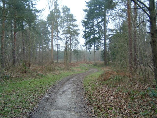 Bishop Wood near Selby