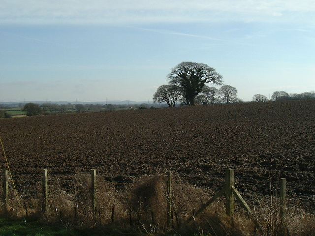 Fields near Rhuallt