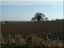 SJ0975 : Fields near Rhuallt by Paul Baxter