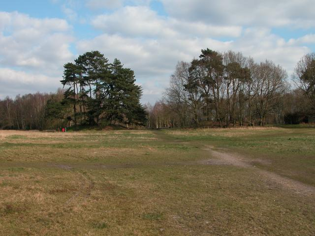 Bronze age burial mounds on Petersfield Heath
