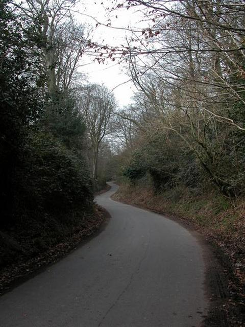 Sunken Lane near Steep Marsh