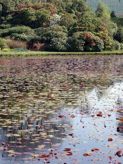 Castle Kennedy Gardens: Lily Pond