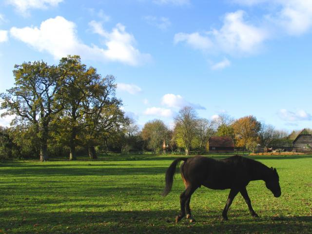 Near Upper Farm: Upper Woolhampton