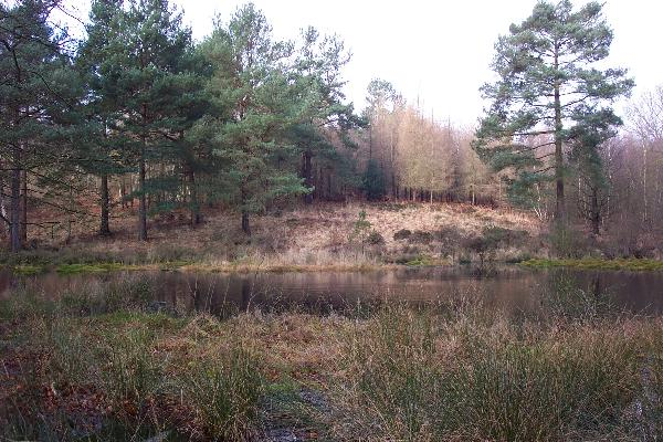 Sole Pond / Sole Plantation