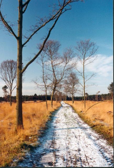 Skipwith Common