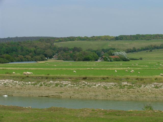 Cuckmere River: North of Cuckmere Haven