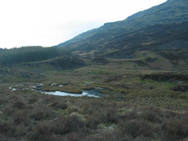 Marsh and Forest at foot of Moelwyn Bach