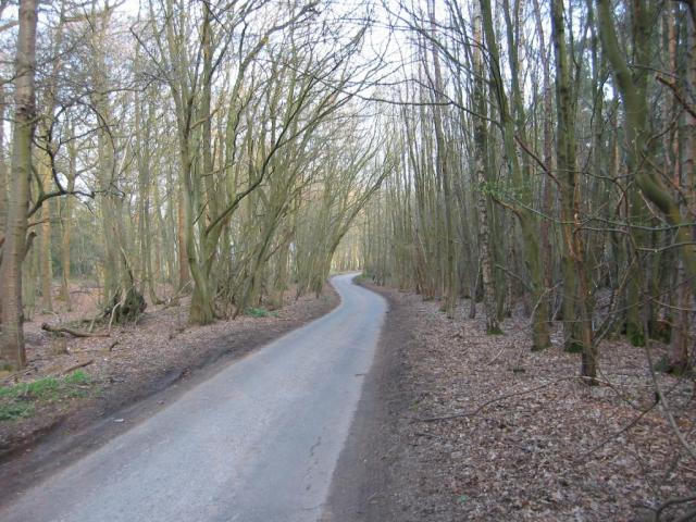 Road through Symondshyde Great Wood