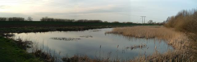 Barlby Ponds
