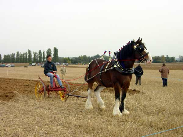 Ploughing Match at Sheldwich