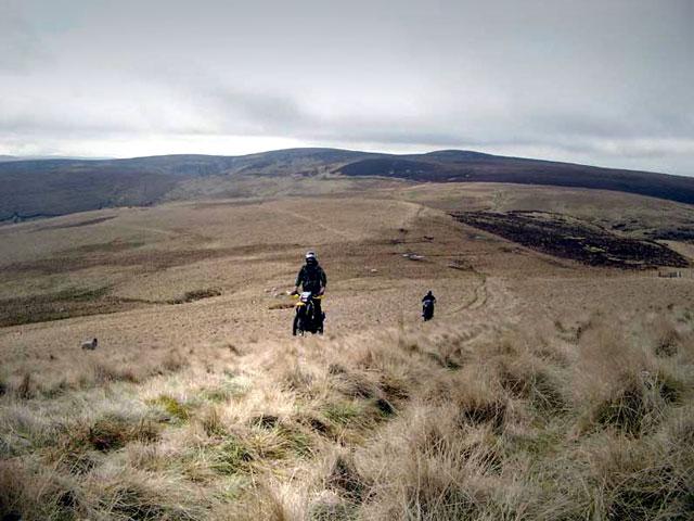 Hillside above Rowhope Burn