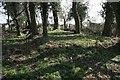 SU8090 : Moor Common by Brendan and Ruth McCartney