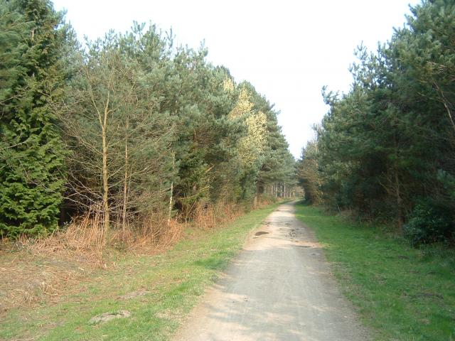 Wheldrake Wood