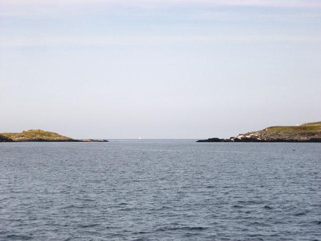 Calf Sound