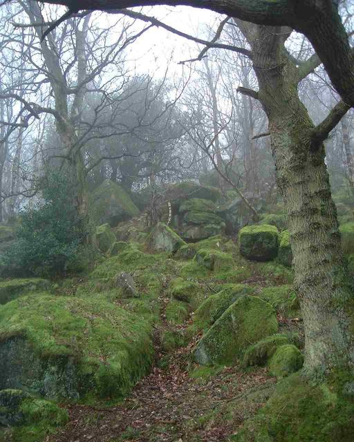 Bark Cabin Wood
