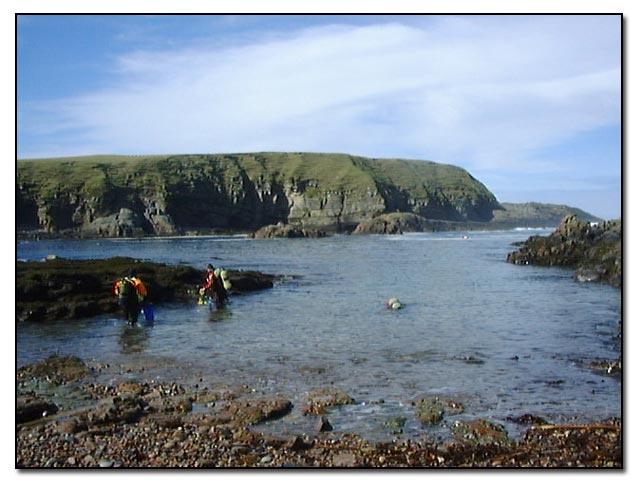 Diving at The Haven, Portskerra, Sutherland