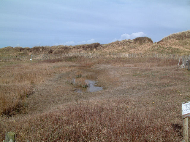 Dune slack on the Sefton coast