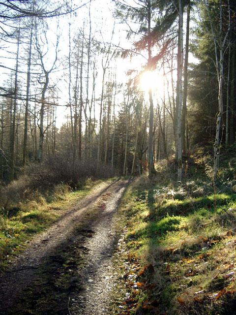 Eildon Hills woodland