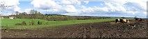 SU5468 : Farmland in the Bucklebury/Midgham Area by Pam Brophy