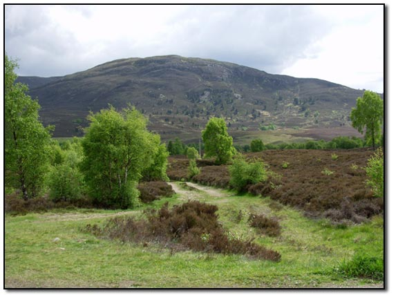 Countryside round Aviemore area