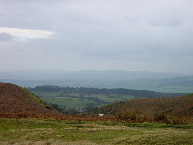 West from Stapeley Common