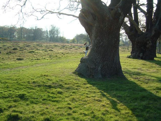 Richmond Park (near Bog Lodge)