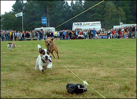 Terrier Races at Moy Games