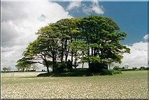 SE8056 : Garrowby Hill Tumulus by Paul Allison