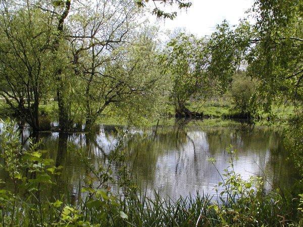 Eversley Cross Green pond