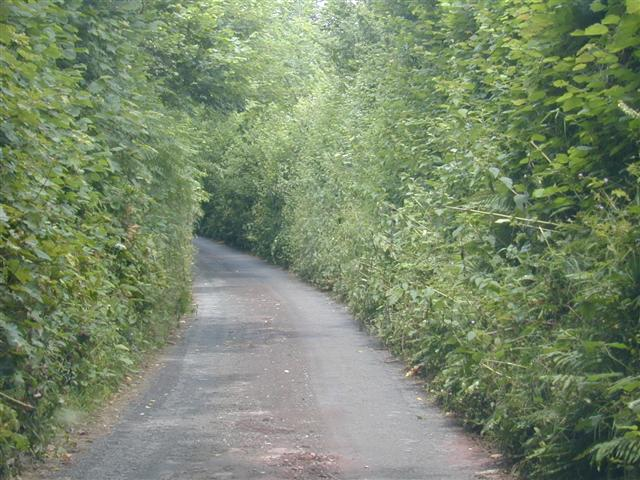 Narrow Devon Lane