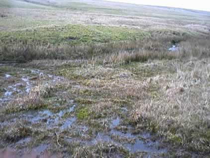Marsh near the source of the Fowey