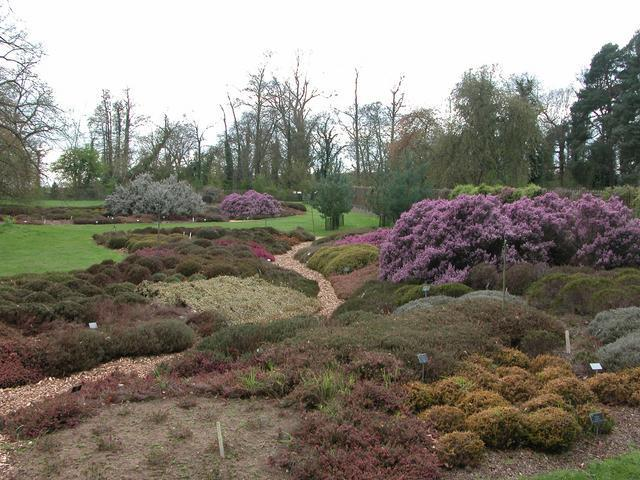 Part of the National Heather collection, RHS Wisley