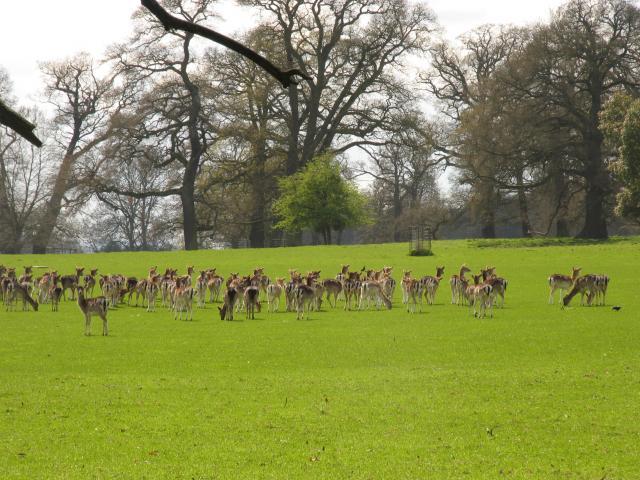 Englefield Estate Deerpark